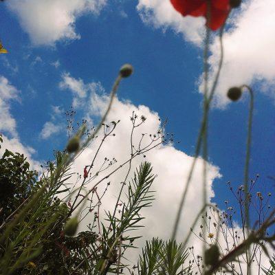 Les pieds sur terre, la tête dans les nuages