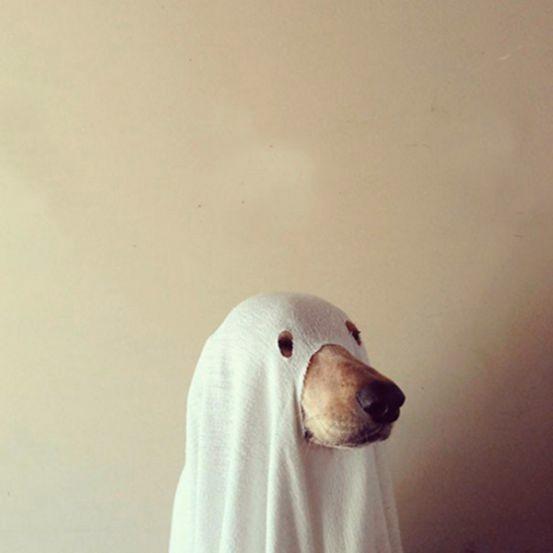 chien fantôme