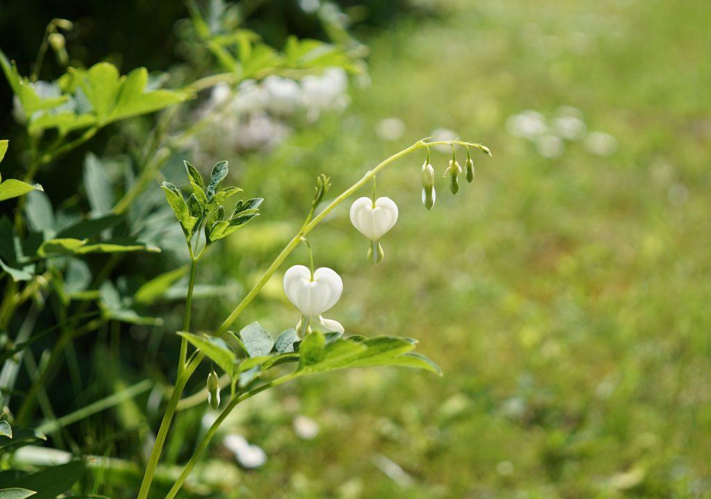 Partage coeur ouvert moral humeur: marche où la vie t'ensoleille
