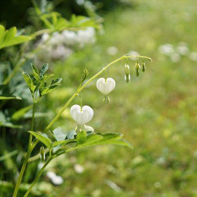 A coeur ouvert #1: Marche où la vie t'ensoleille