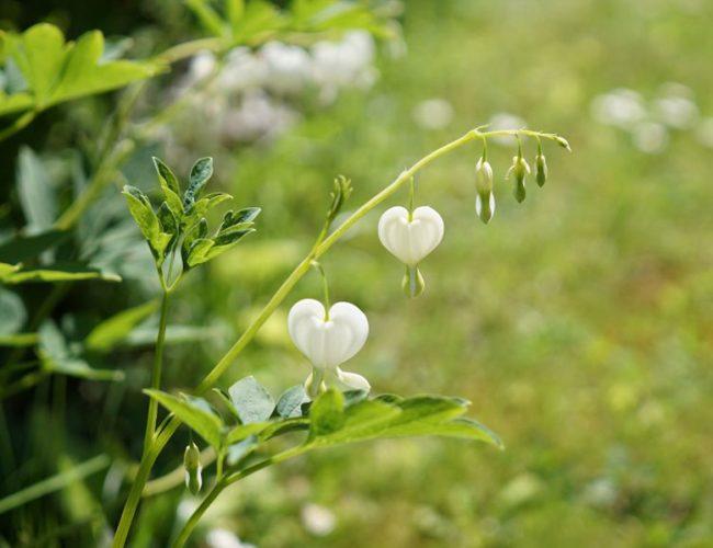 marche ou la vie t'ensoleille vu par Tea&Poppies