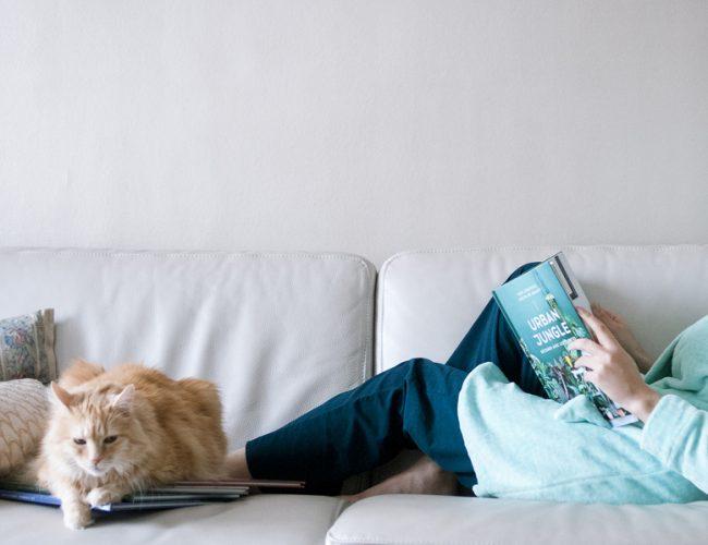 livre, chat, canapé, cocooning, détente, blog, partage, lifestyle, décembre