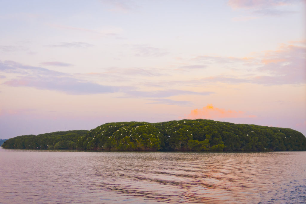 photo, paysage, ciel, coucher de soleil, Rajah Island, Kerala, Inde