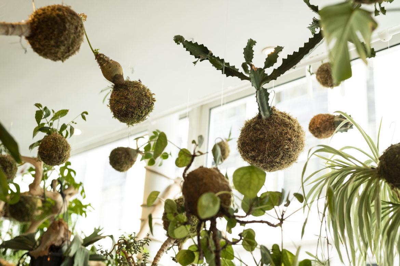 photo, kokedame, plantes, suspendus, Ikebanart, Paris
