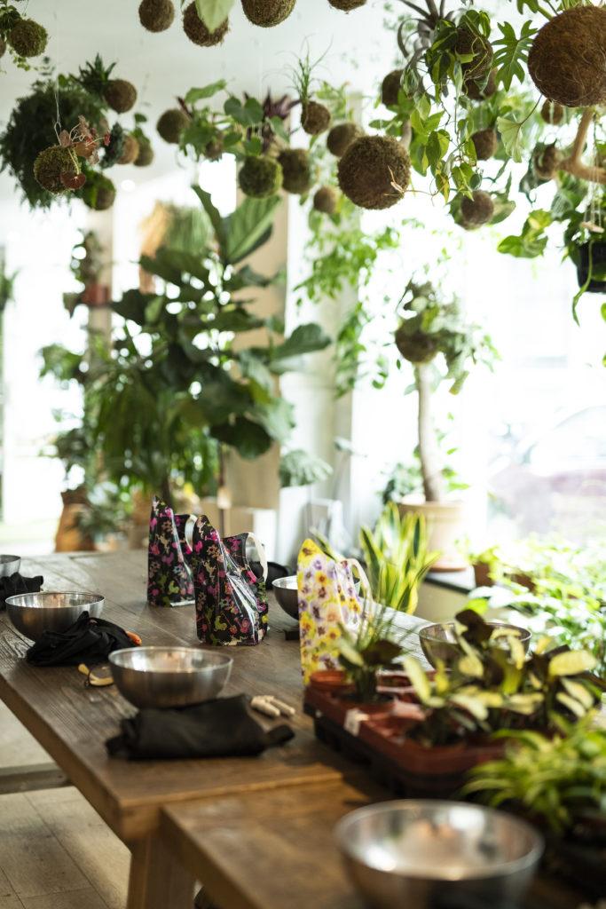 photos, atelier kokedama, plan de travail, plantes