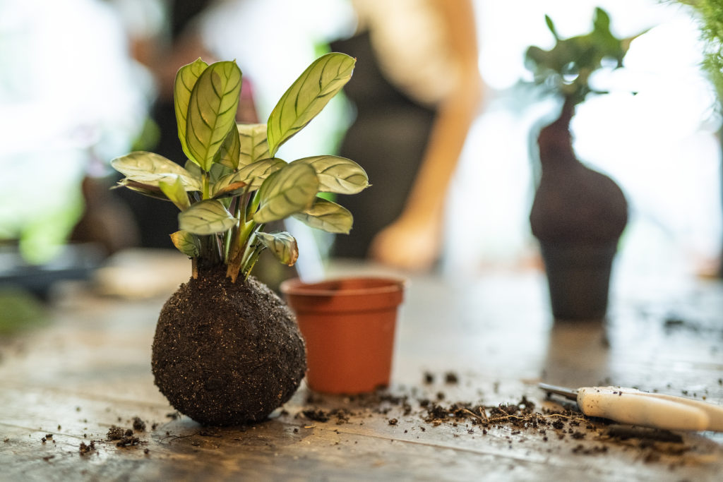 photo, plante, kokedama, atelier