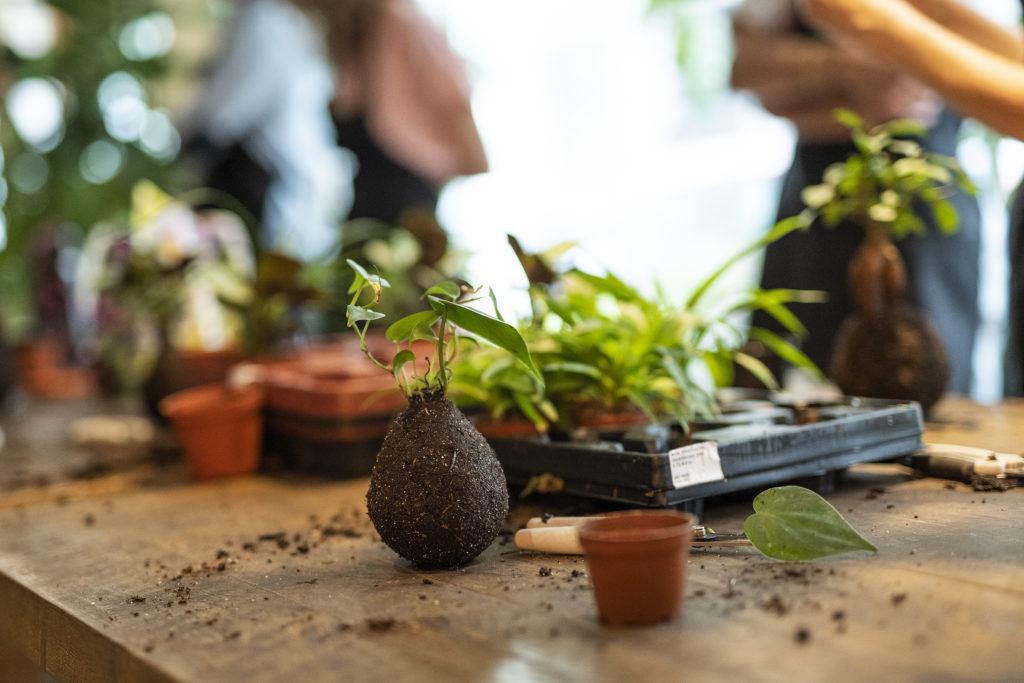 atlier, photo, création, kokedama, plantes, Ikebanart