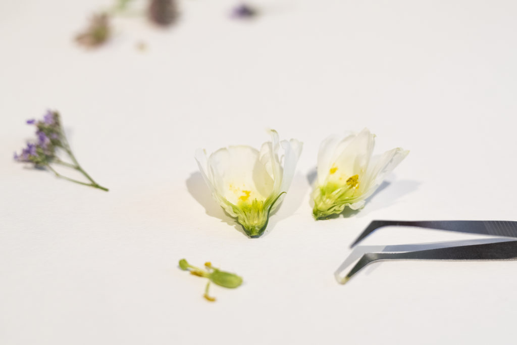 photo, Herbarium, fleur, découpage