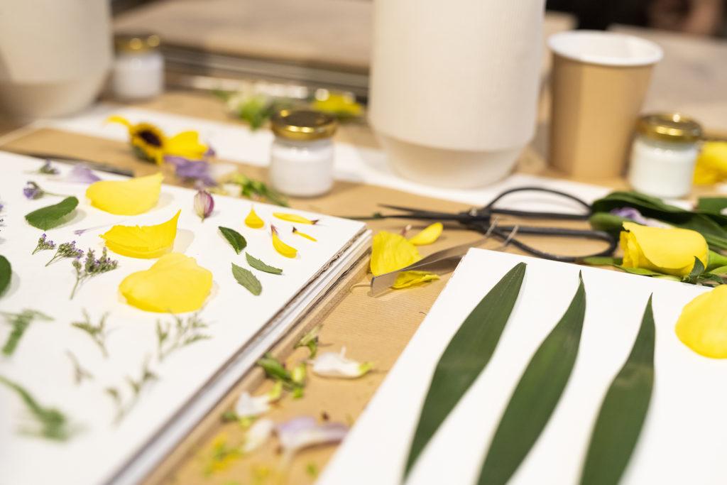 photo, atelier Herbarium, apprendre à secher ses fleurs