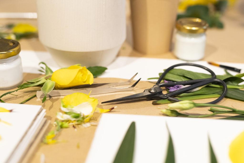 photo, apprendre à secher ses fleurs